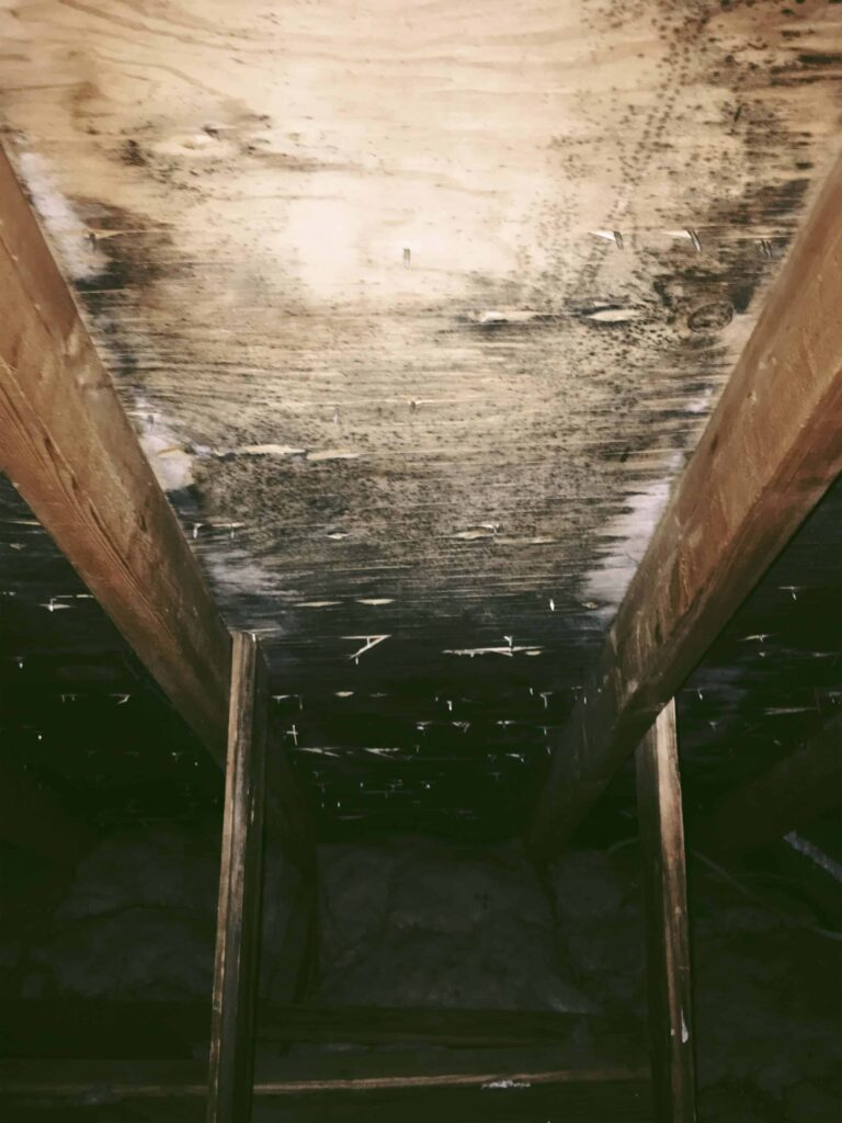 mold growing under roof of attic in our old house